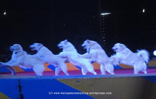 circus dog show